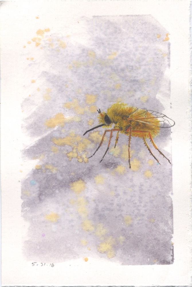 Yellow Fly