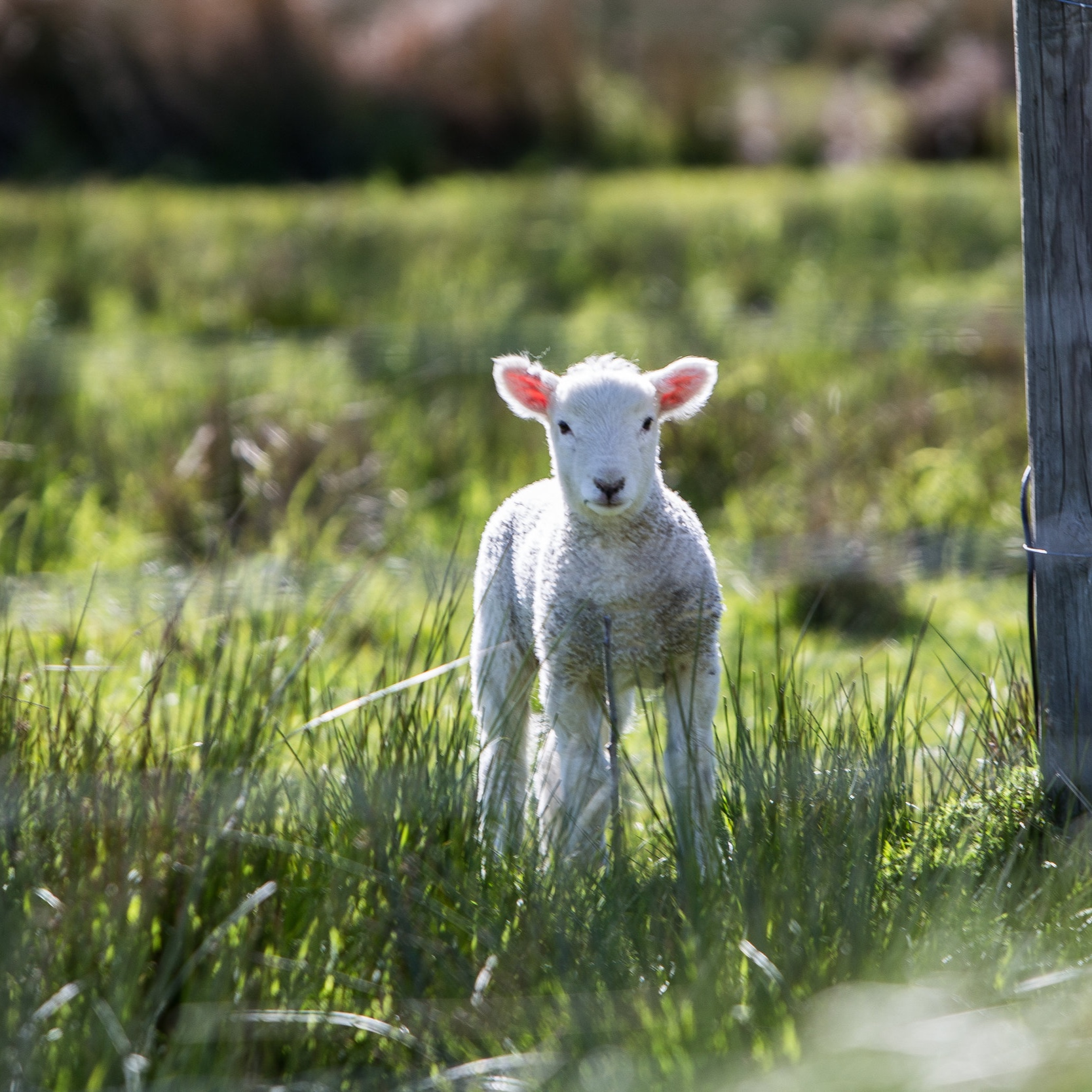 Easter - Surprised Thomas