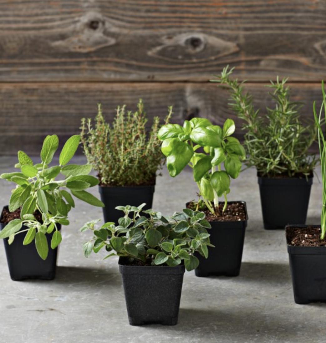 Essential Herbs, $30