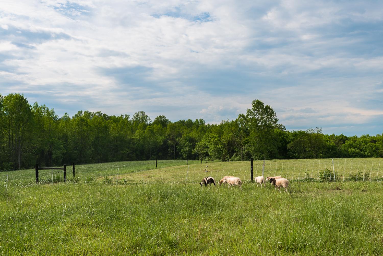 Evans-Family-Farm-26.jpg