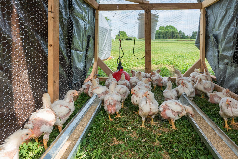 Evans-Family-Farm-44.jpg