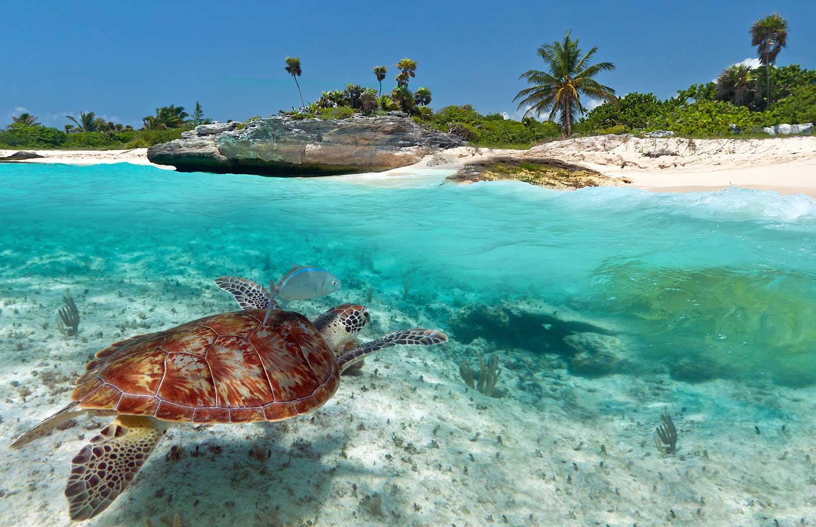 CRUISE ITINERARYDay 1Miami - Departs at 07:00 PMDay 2At SeaDay 3Costa Maya - Arrives at 09:00 AMDay 4At SeaDay 5The Beach Club At Bimini - Arrives at 09:00 AMDay 6Miami - Arrives at 06:30 AM -