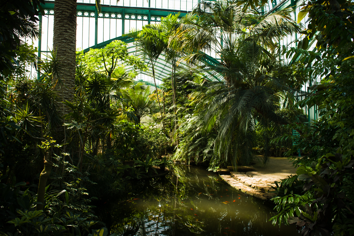 France, Paris. Inside a greenhouse in the Jardins des Serres d'Auteuil. The plants grown in the greenhouses in the Jardins des Serres d'Auteuil are used for the decoration of municipal buildings in Paris.
