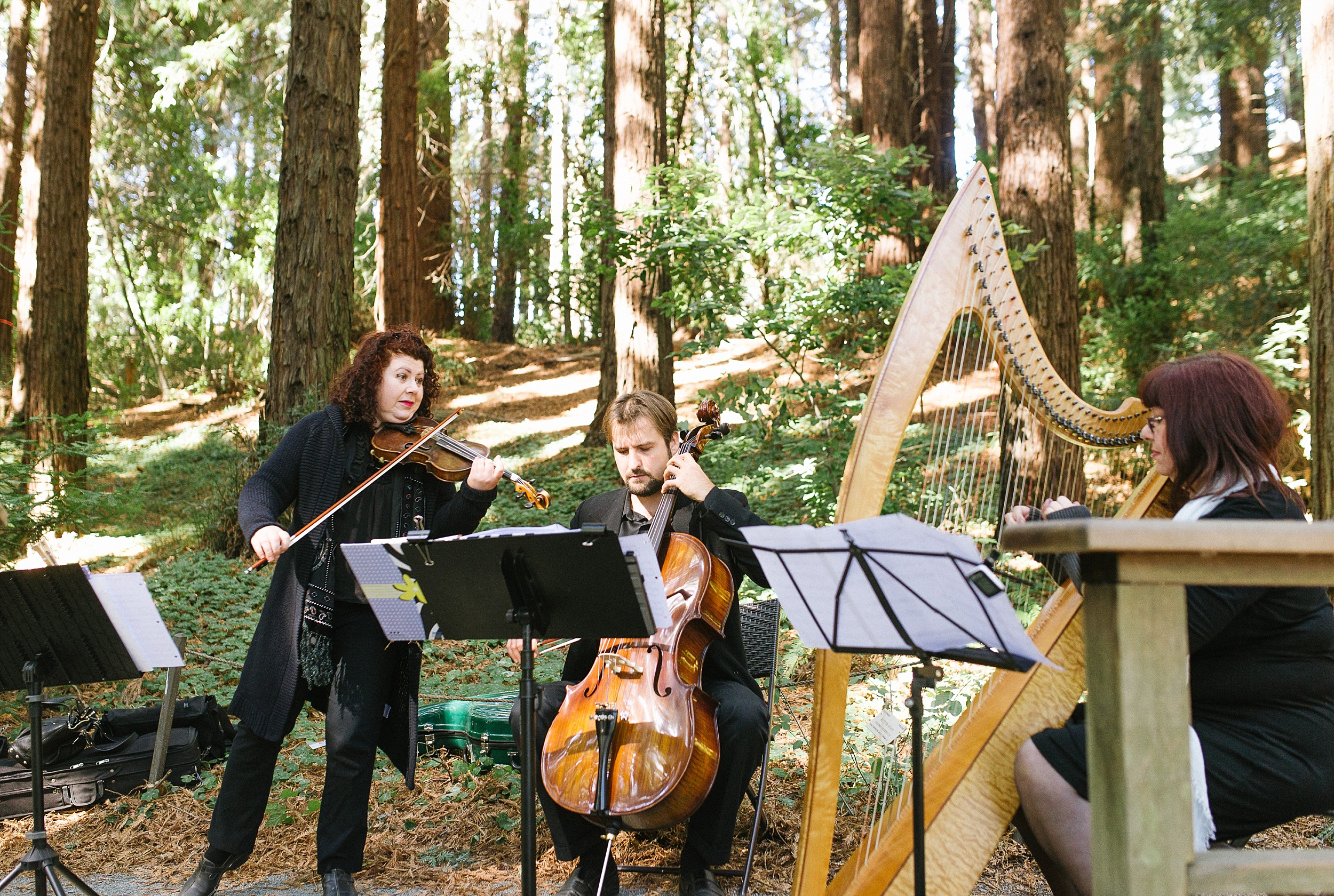 ucberkeley_botanical_redwoods_outdoor_wedding_jennyrez_cdp_0013.jpg