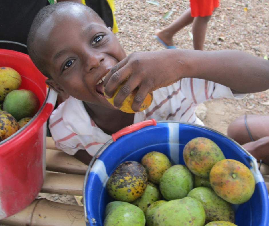 We Had A Delicious Mango Harvest!