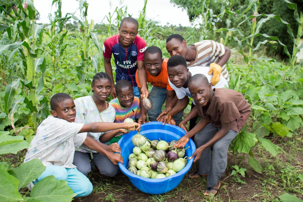 Eggplant-Harvest.png