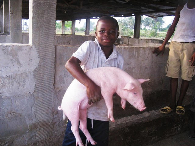 Our student Abel helping out in the piggery in 2007.