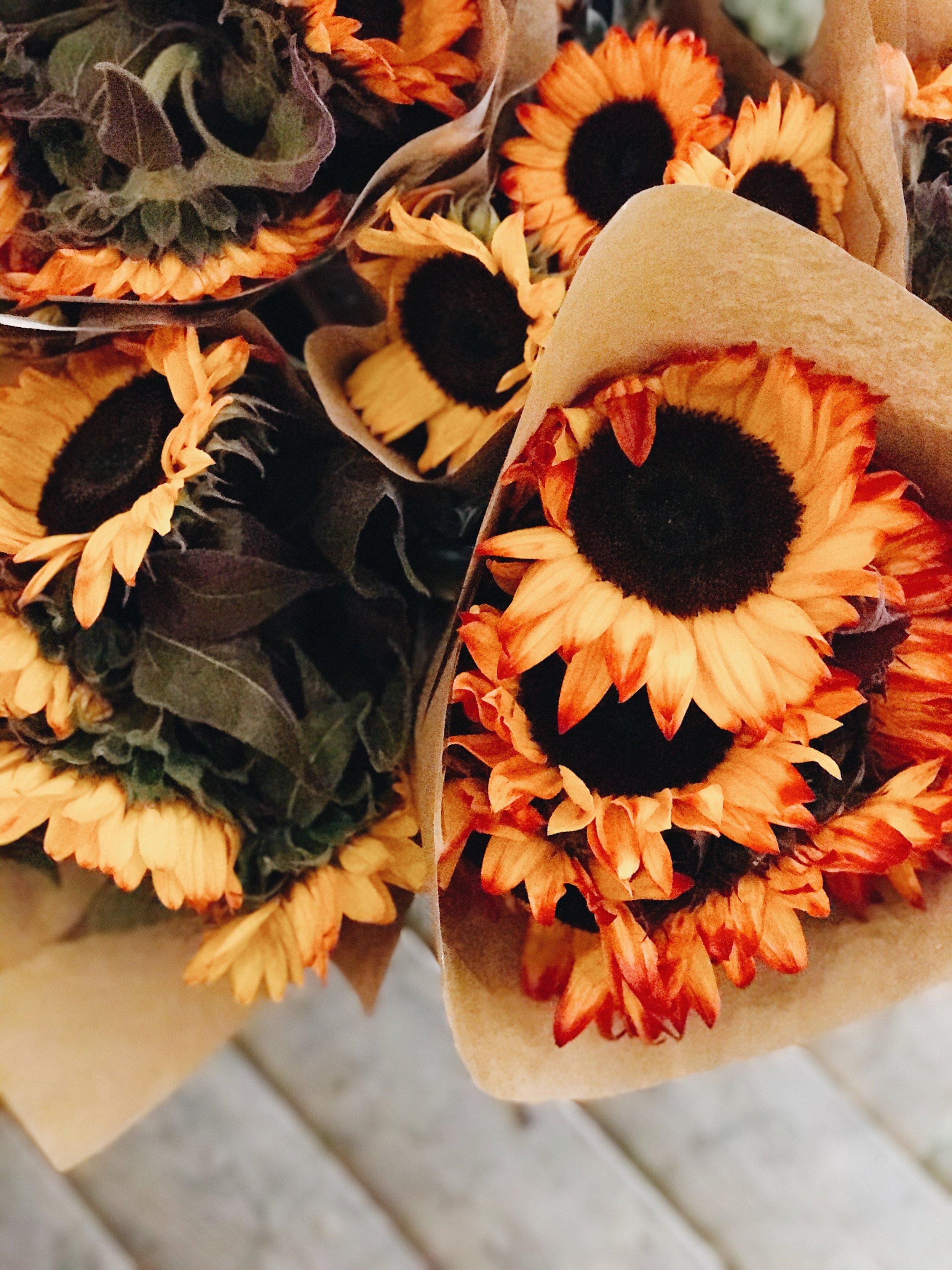 Fall Flowers 101, Orange Sunflowers, Nyla Free Designs Inc.