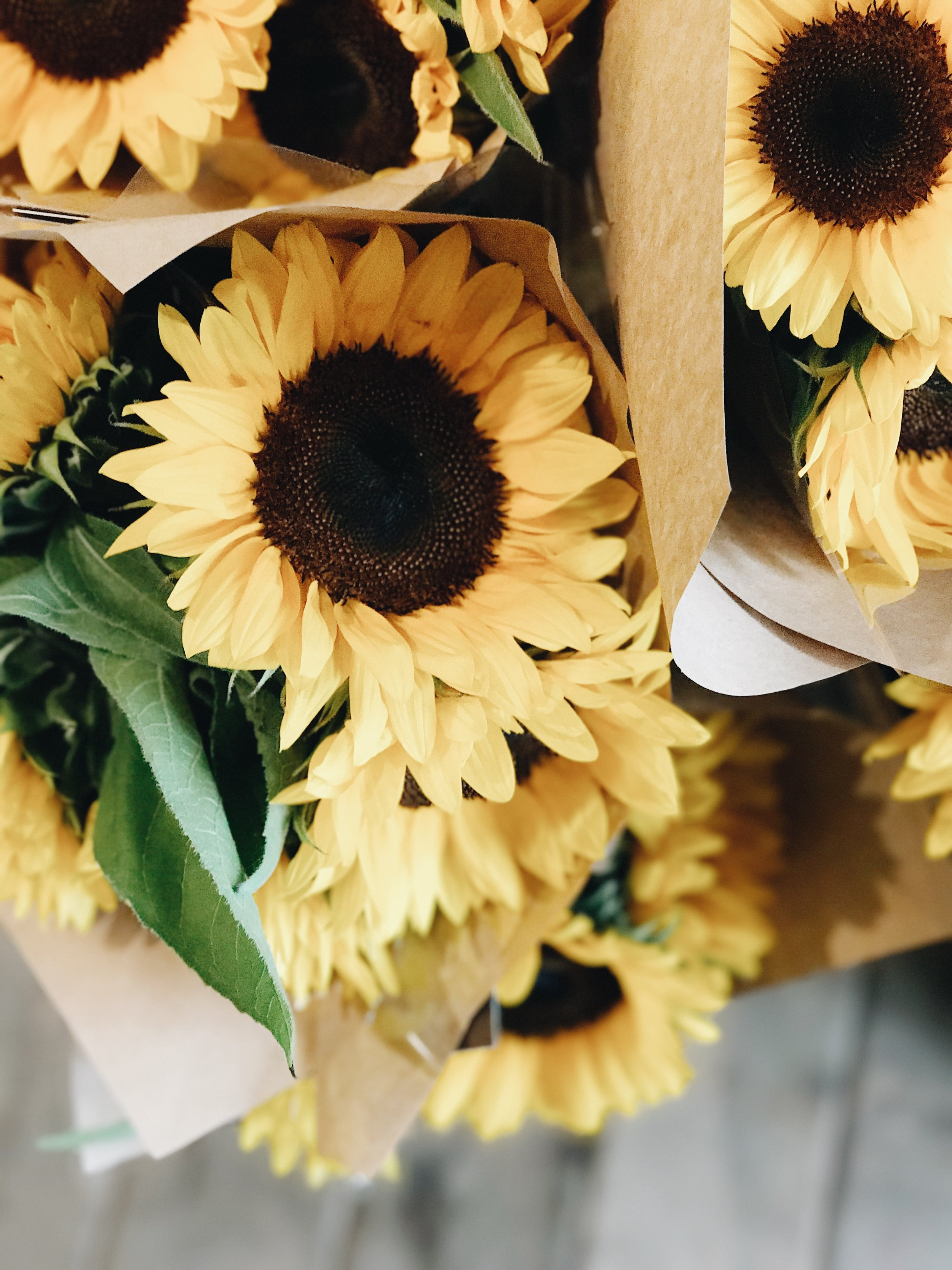 Fall Flowers 101, Yellow Sunflowers, Nyla Free Designs Inc.