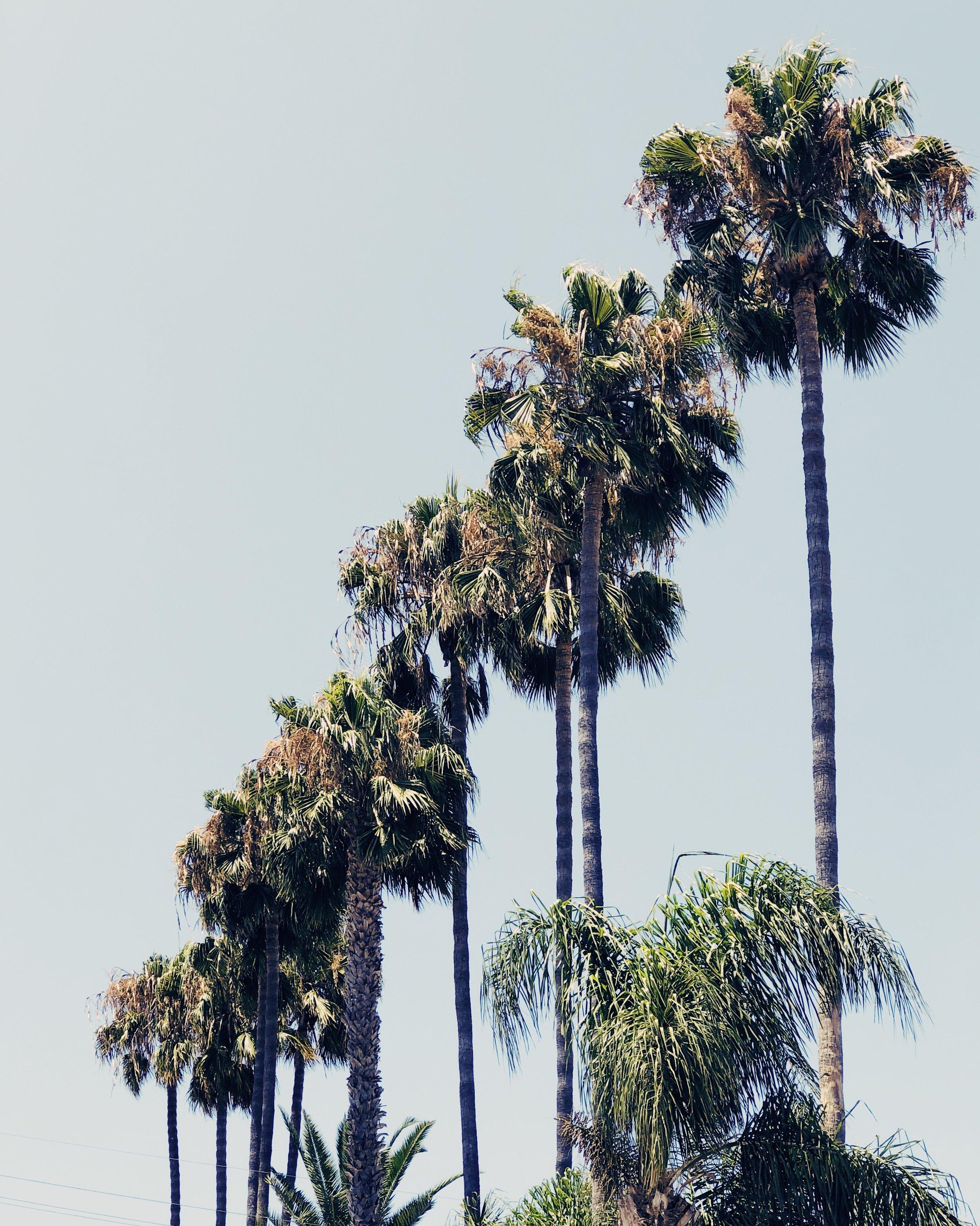 California Palm Trees, Nyla Free Designs Link Love