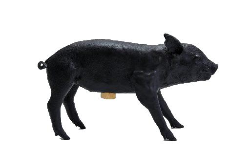 PigBlack-514x343.png