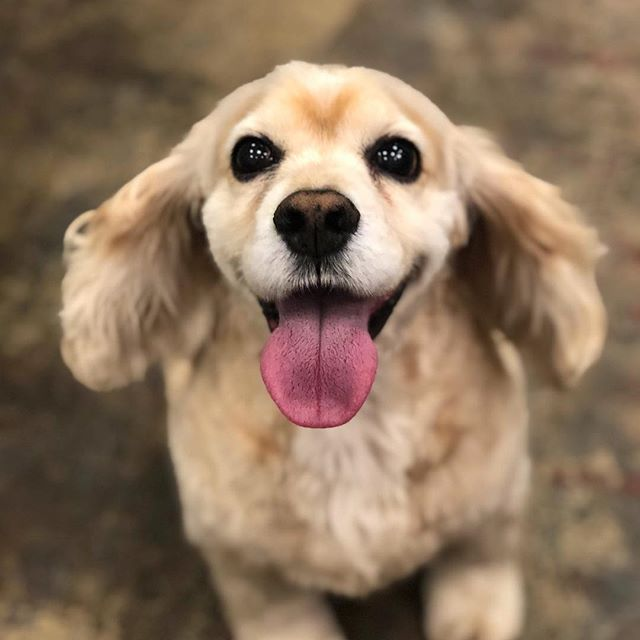 Look at that smile 🐾 . . . #dogcoffee #dogcafe #astoriaqueens #astoria #astorialife #dogsofnyc #dogsofnewyork #Chateaulewoof