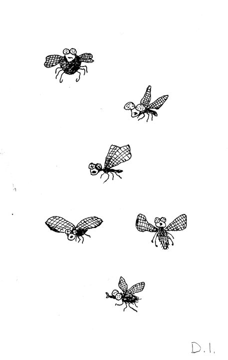 """fly types, 2009 ink on paper 5 5/8 x 3 3/4 """""""