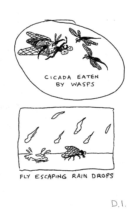 """insect events, 2009 ink on paper 5 5/8 x 3 3/4 """""""