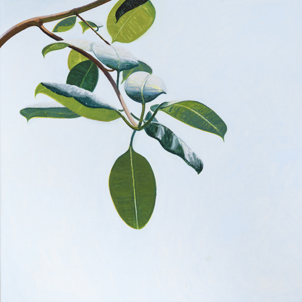 branch 3 , 2013 oil on linen 30 x 30 inches