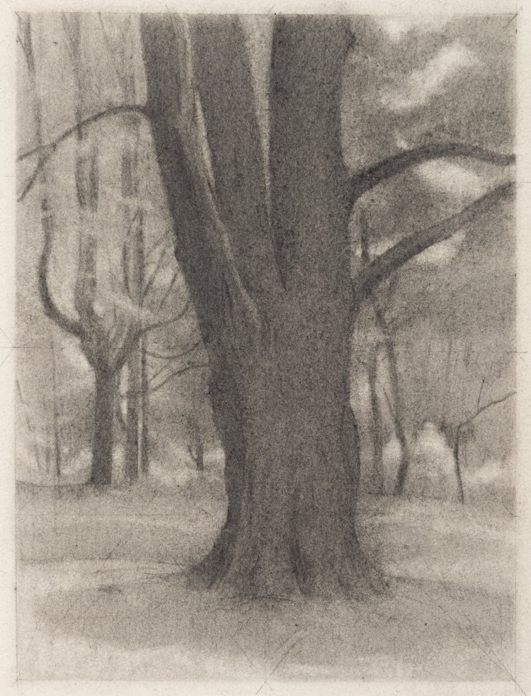 Trunk , 2017  pencil on paper  12 x 9 inches