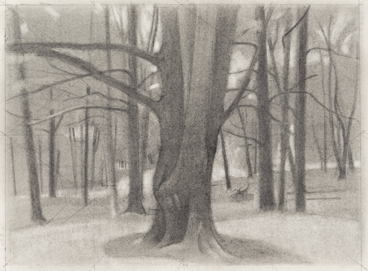 Maple , 2017  pencil on paper  9 x 12 inches