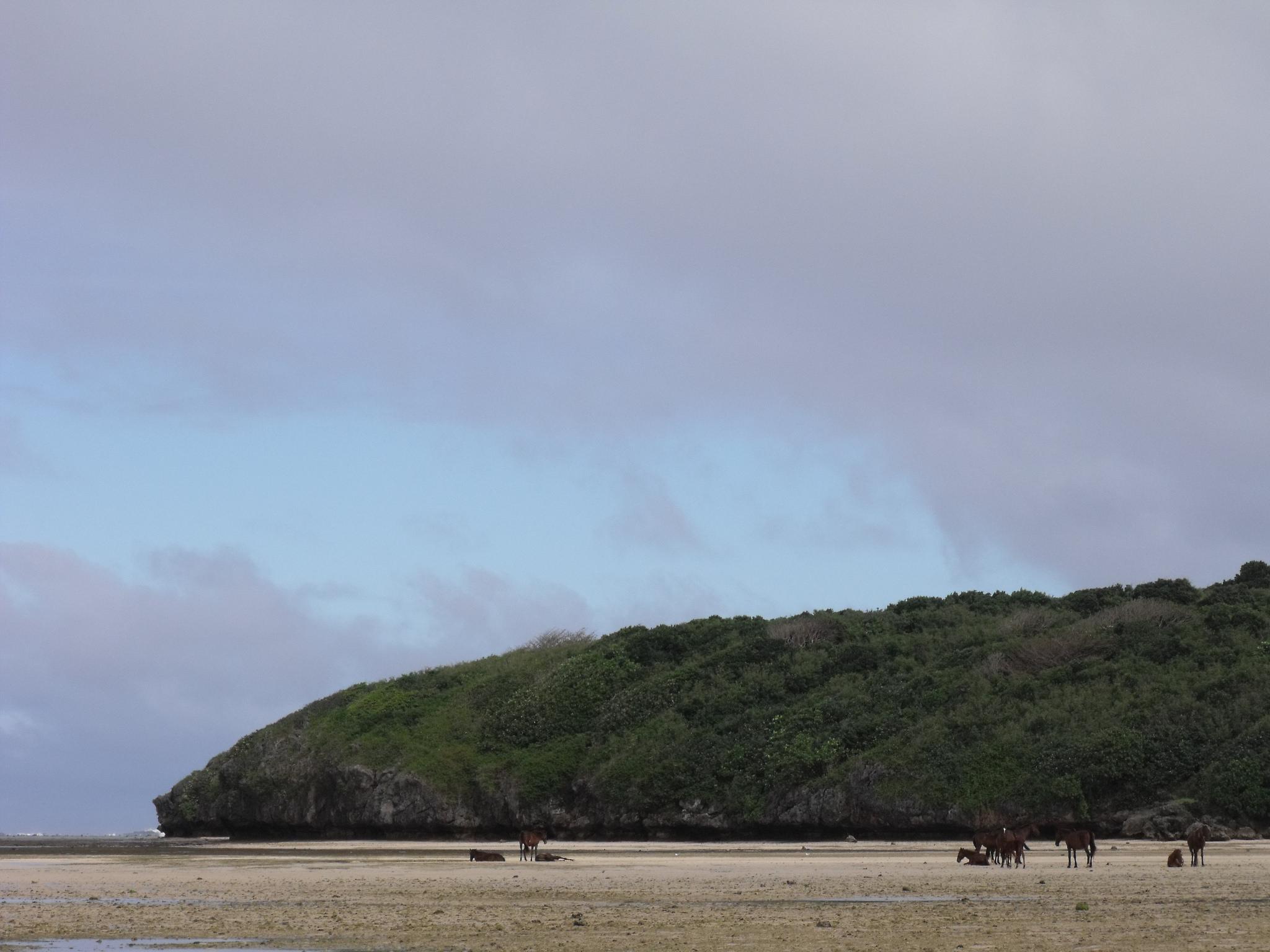 Wild Horses (Fiji, 2009)