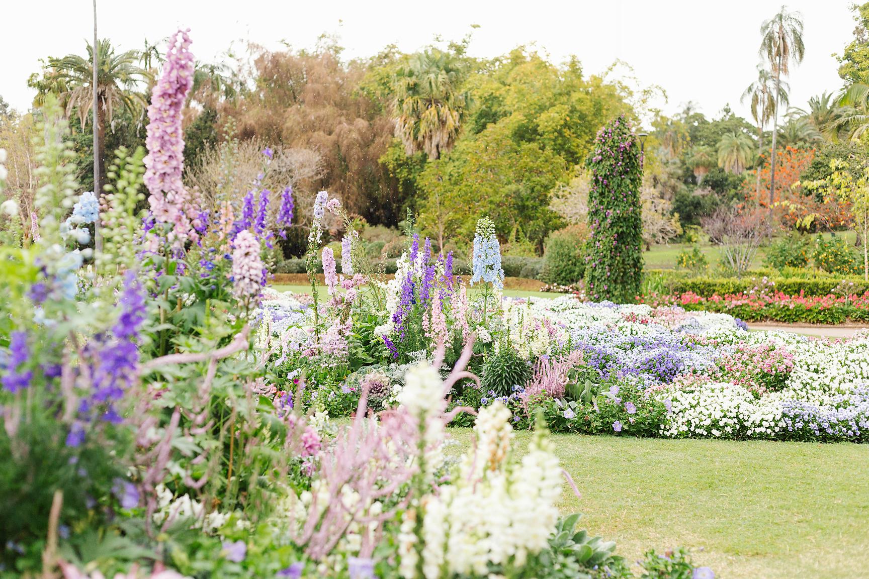 Brisbane Botanic Garden Wedding Photographer