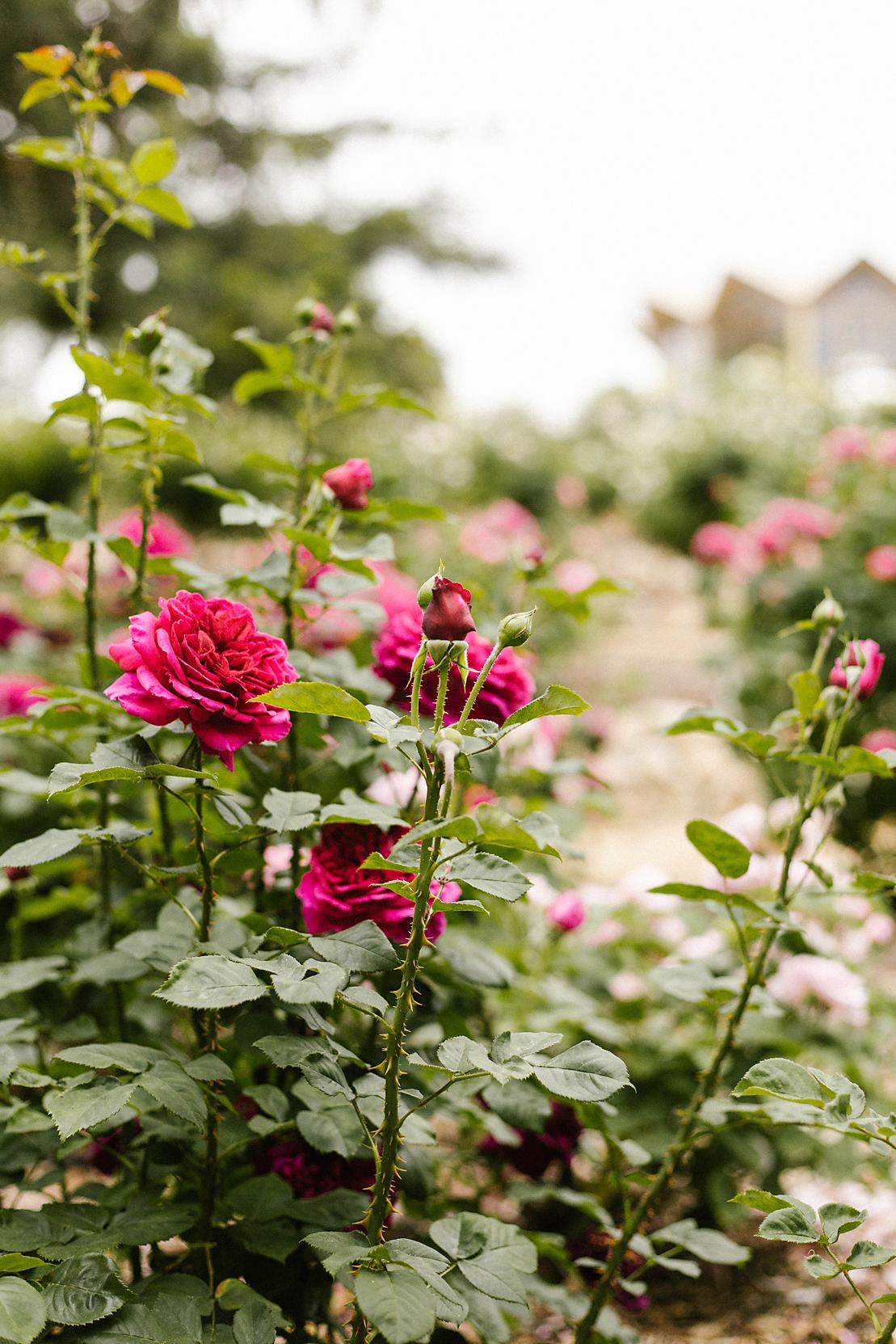 Barossa Chateau Lyndoch Hill Wedding Photographer