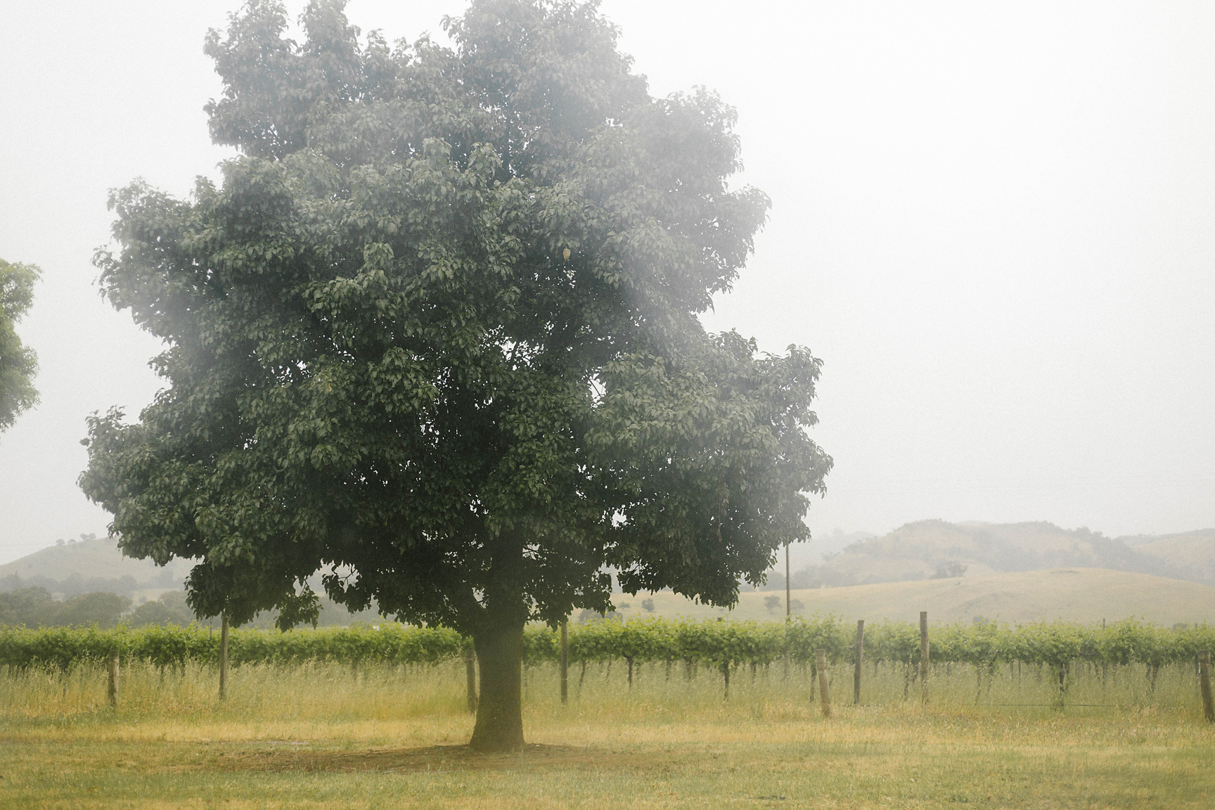 The view from our car; Barossa Valley is so pretty in the misty rain <3