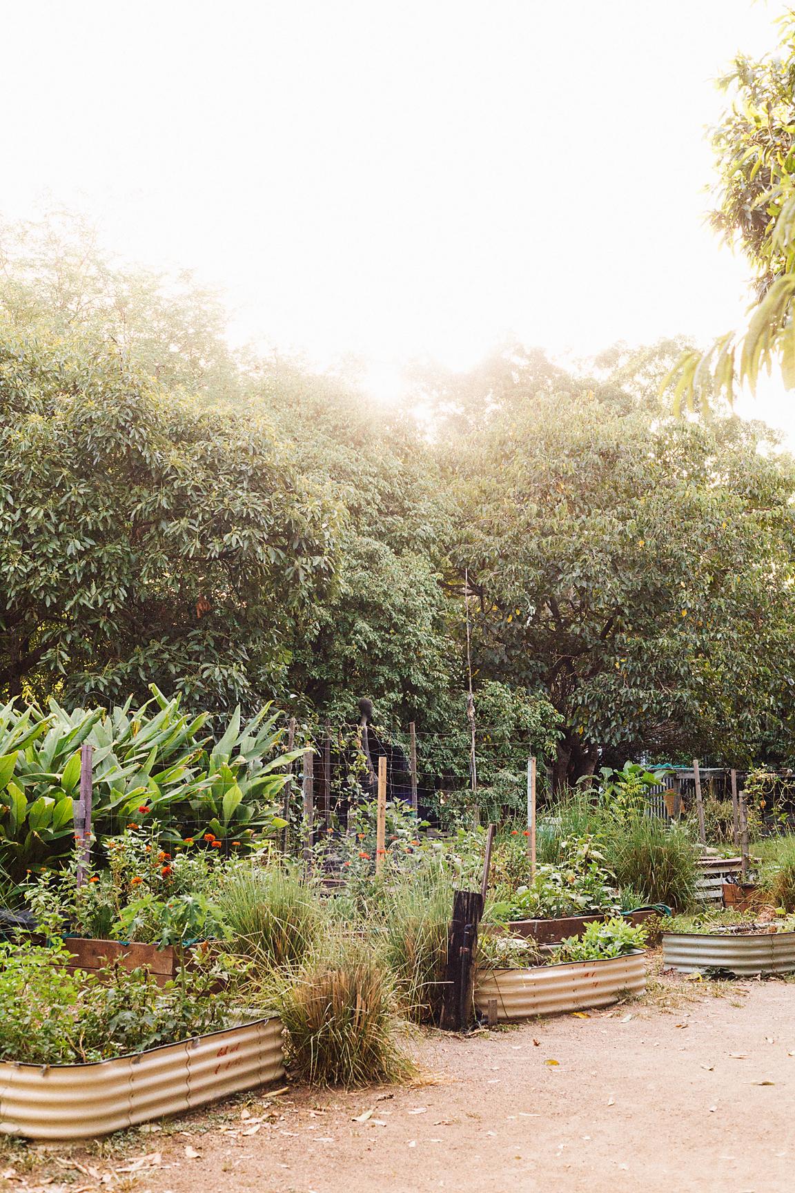 Northey Street City Farm & immediate surrounds (Poppy & Sage Photography)