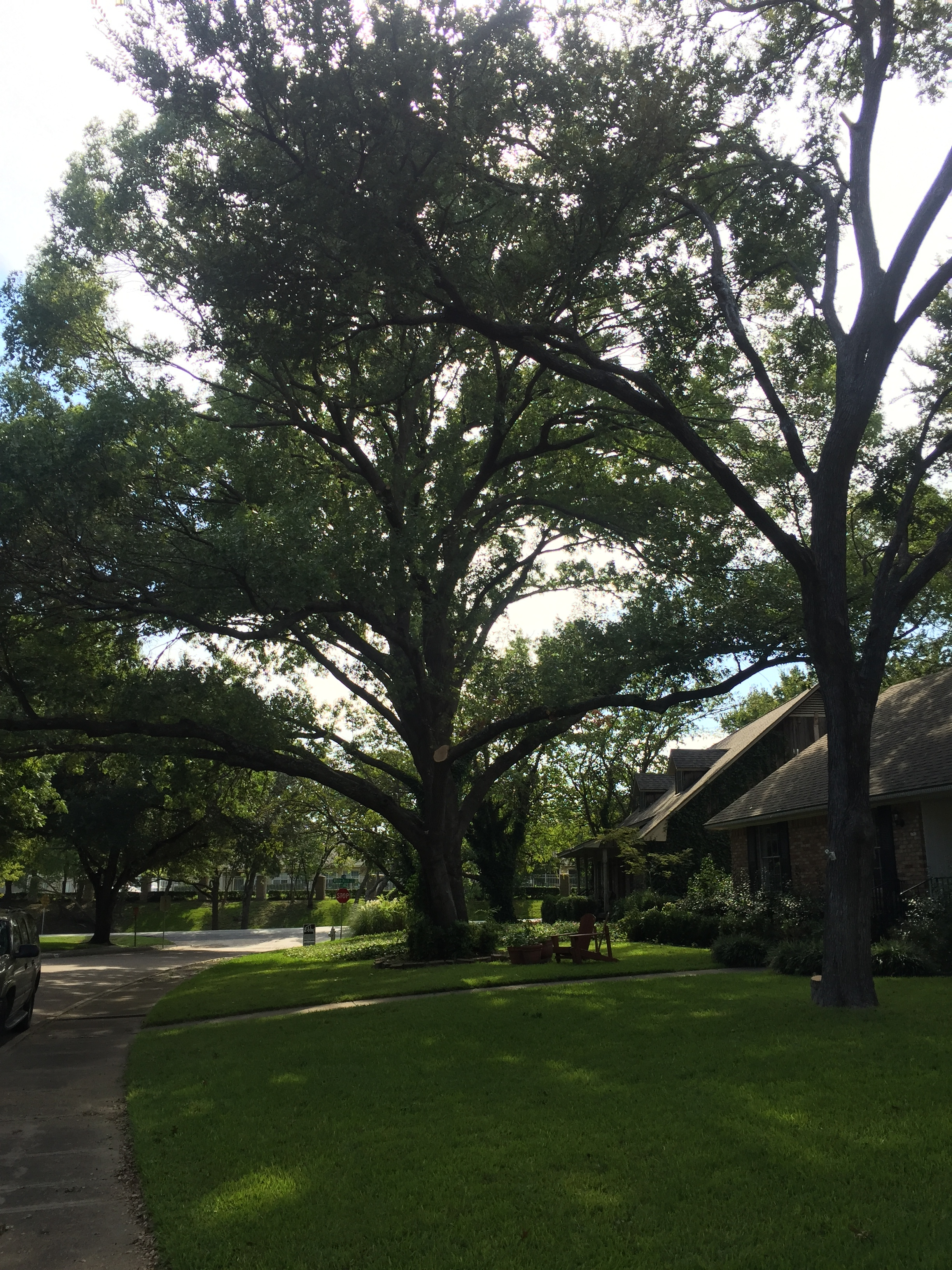 WEll-maintained trees add beauty and increase the value of your home!