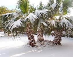 cold palms!.jpg