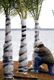 palm wrapping.jpg