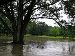 flooded tree.jpg