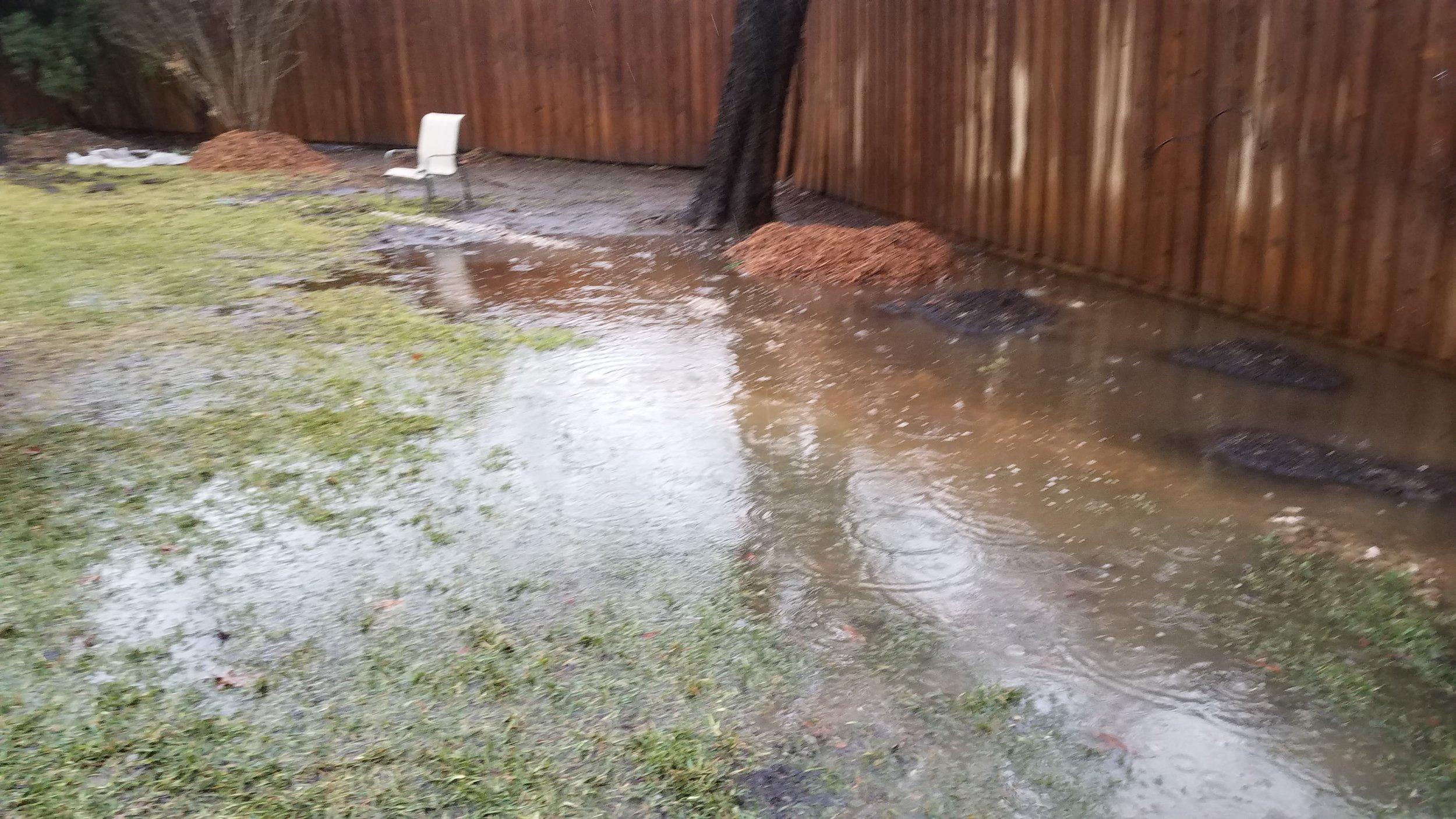 flooded tree2.jpg