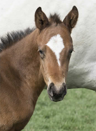2016 Tale of the Cat colt out of It's In His Kiss