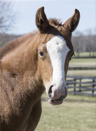 2016 More Than Ready filly out of Morning Gallop