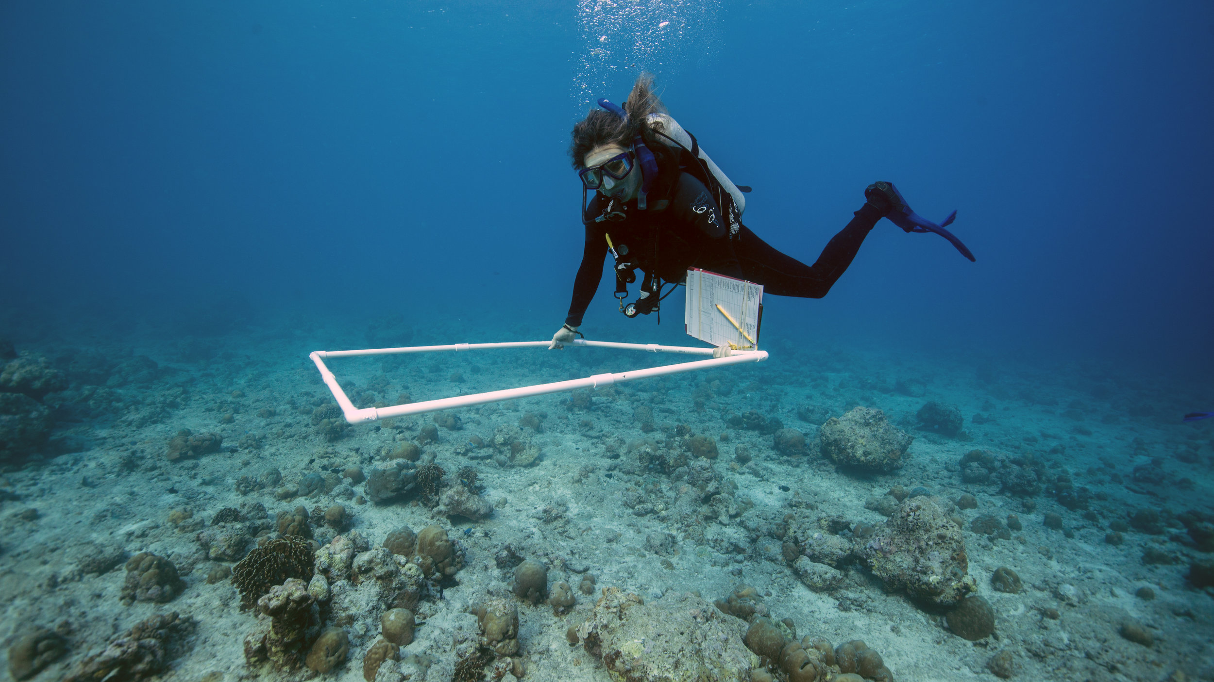 Dr. Woolsey using a quadrat, a clipboard, underwater paper, and a pencil to survey the reef with the WCS protocol