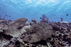 It is estimated that 60% of coral reef cover was lost during the 2016 bleaching event
