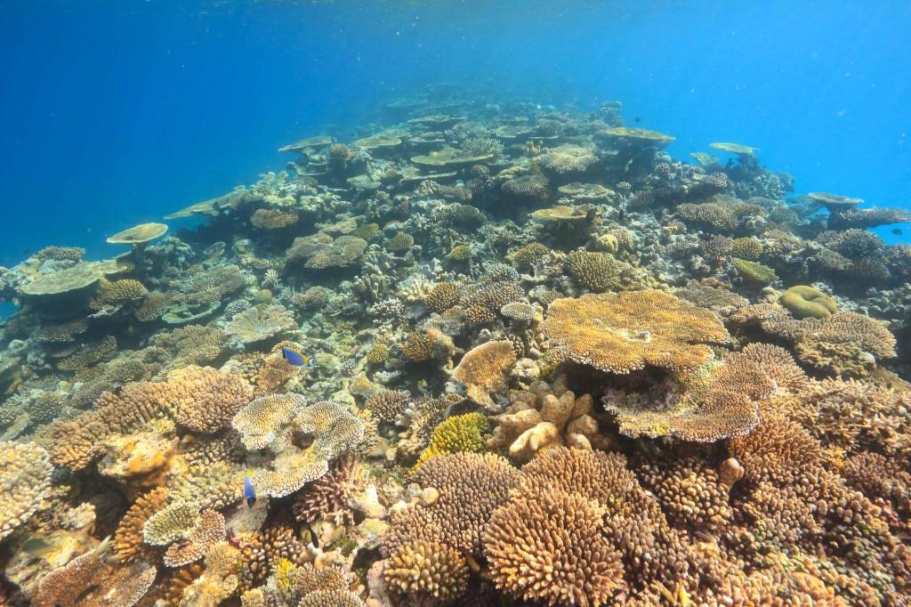 Veva reef