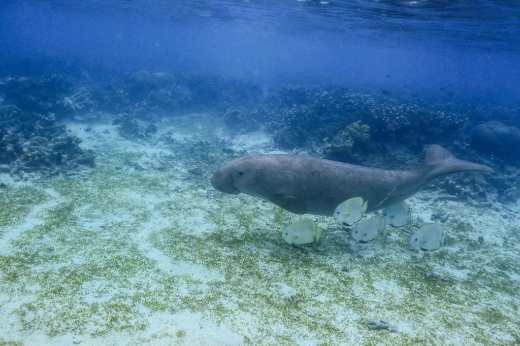 dugong and friends