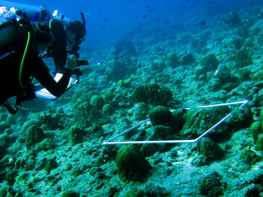 Nora and Erika doing the simple rapid protocol to assess coral mortality following a massive bleaching event earlier this year.