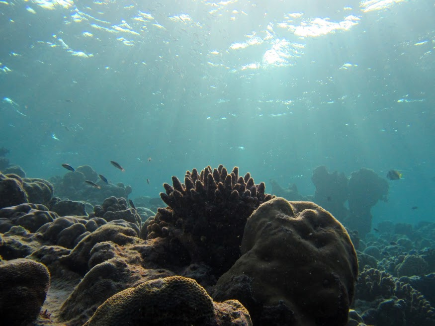 The world under the blue. A lot of coral in the Maldives is dying due to rising water temperatures.