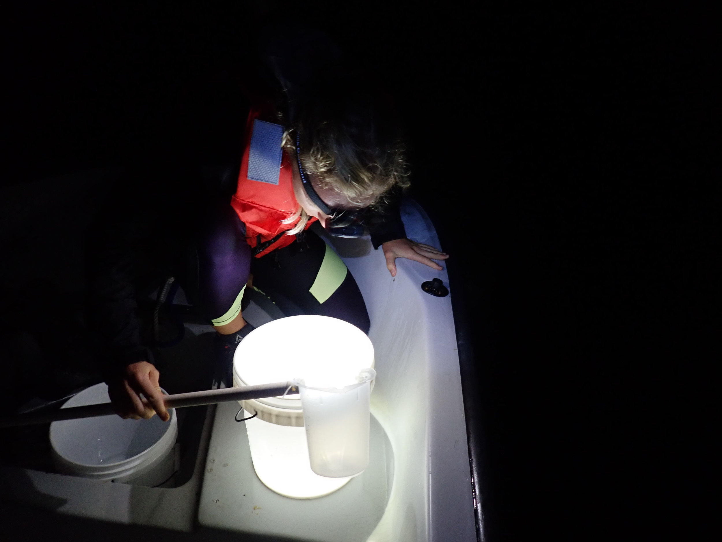 PhD candidate, Ariana Huffmyer, allocating the right densities of bundles to buckets of sea water. (Photo: S. Matsuda)
