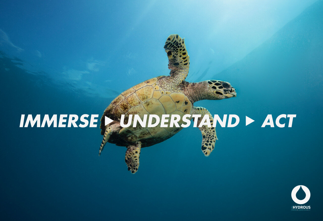 Poster-5B-Immerse Understand Act Turtle.jpeg