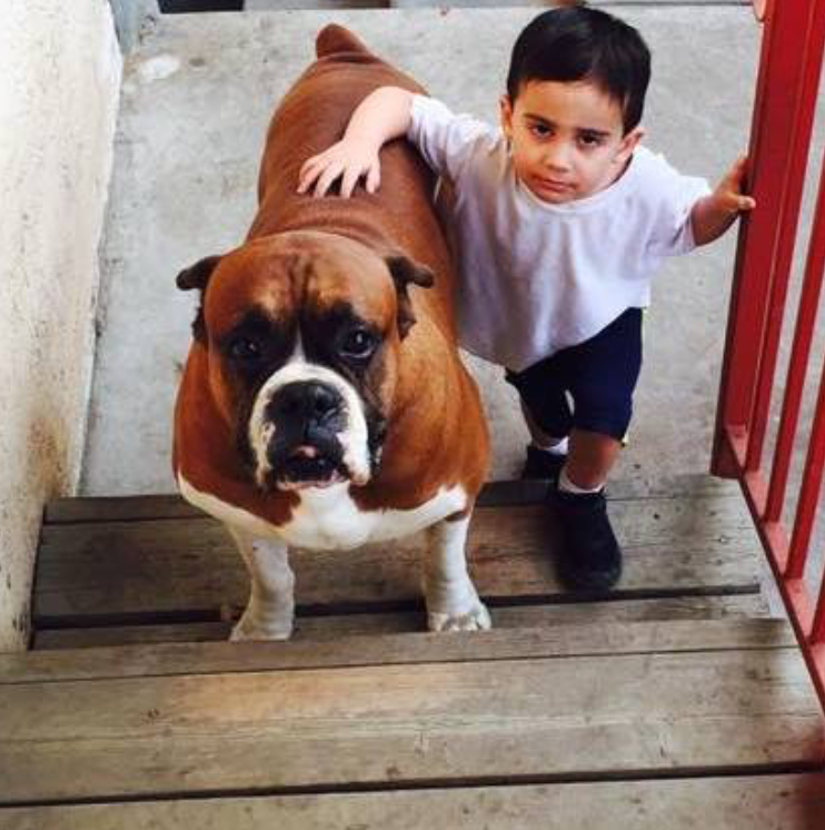 Gavril Britto, 3, lost his best friend, boxer J.J., in March after the dog was apparently poisoned by San Diego criminals when Gavril's father, Sgt. Gilbert Britto, was deployed.