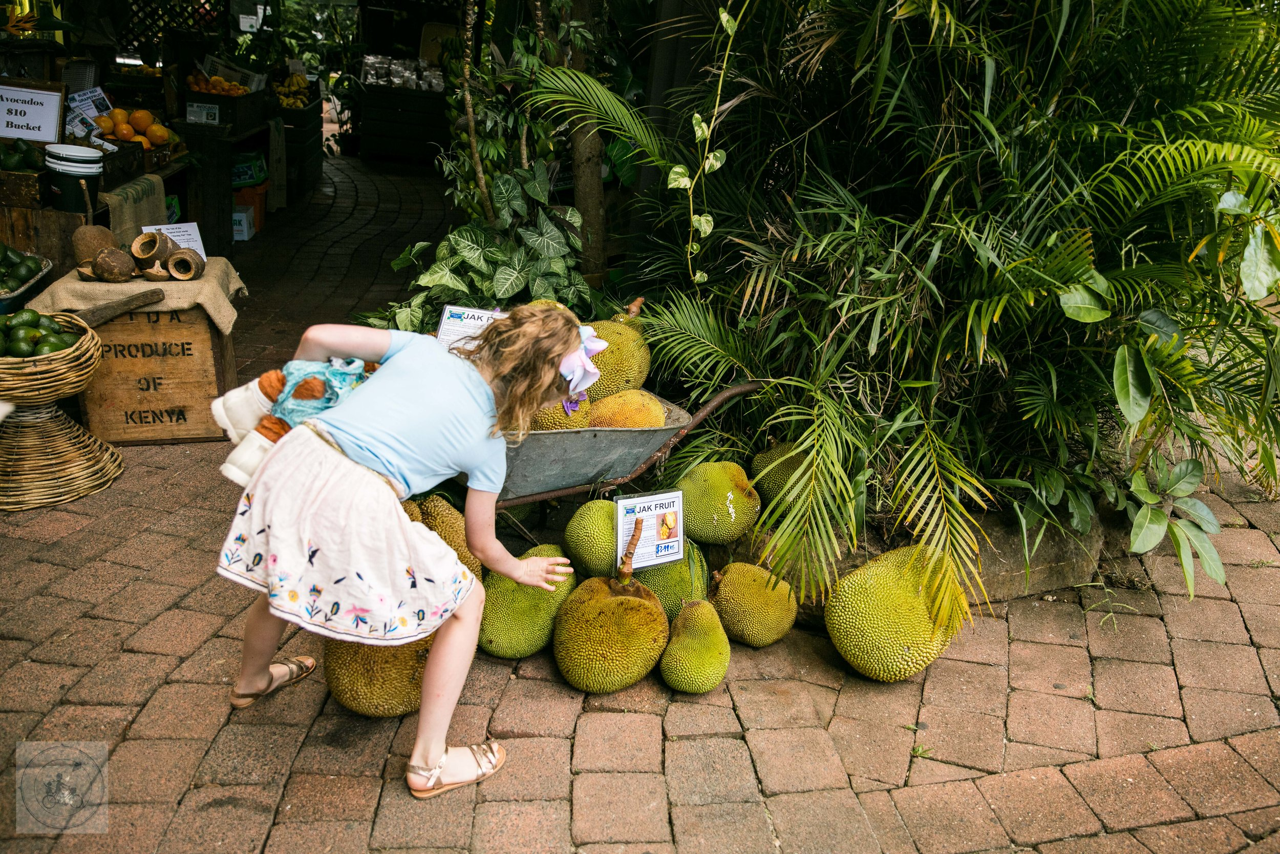 tropical fruit world mamma knows byron (6 of 74).jpg