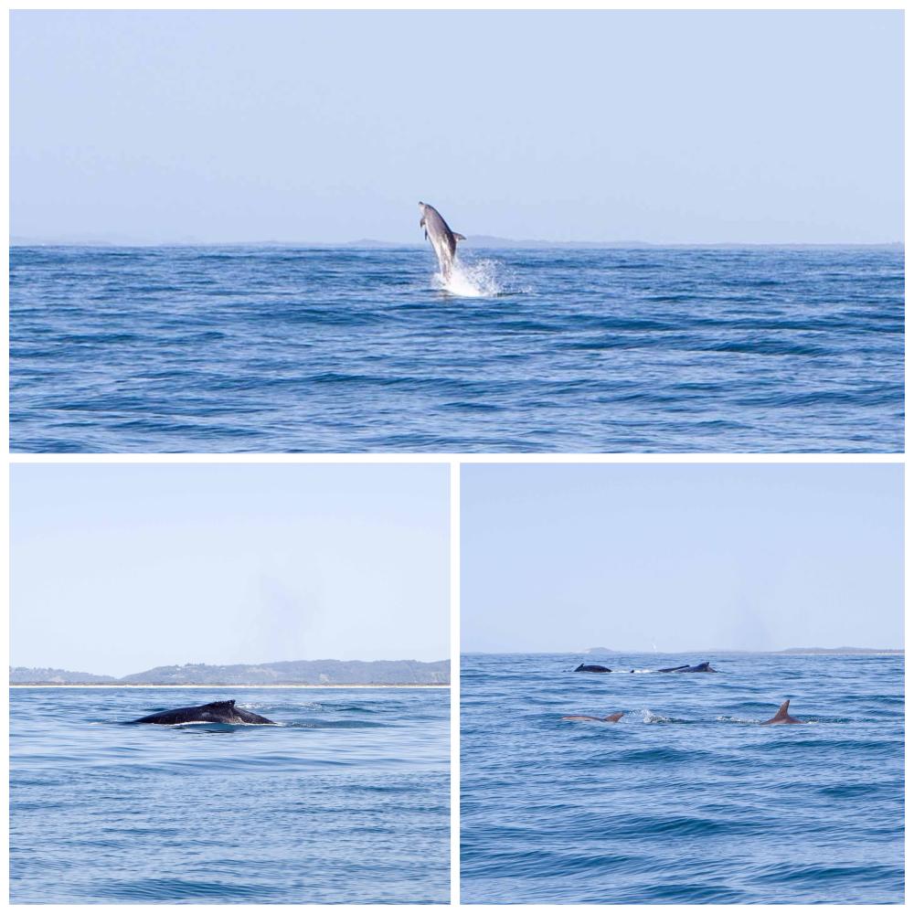 WhaleWatching-MammaKnowsByron1.jpg