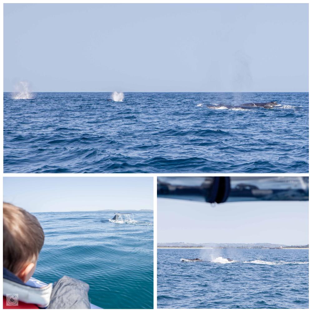 WhaleWatching-MammaKnowsByron2.jpg