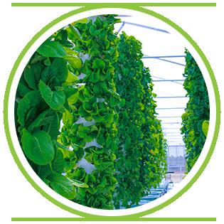 Buy Tower Garden -