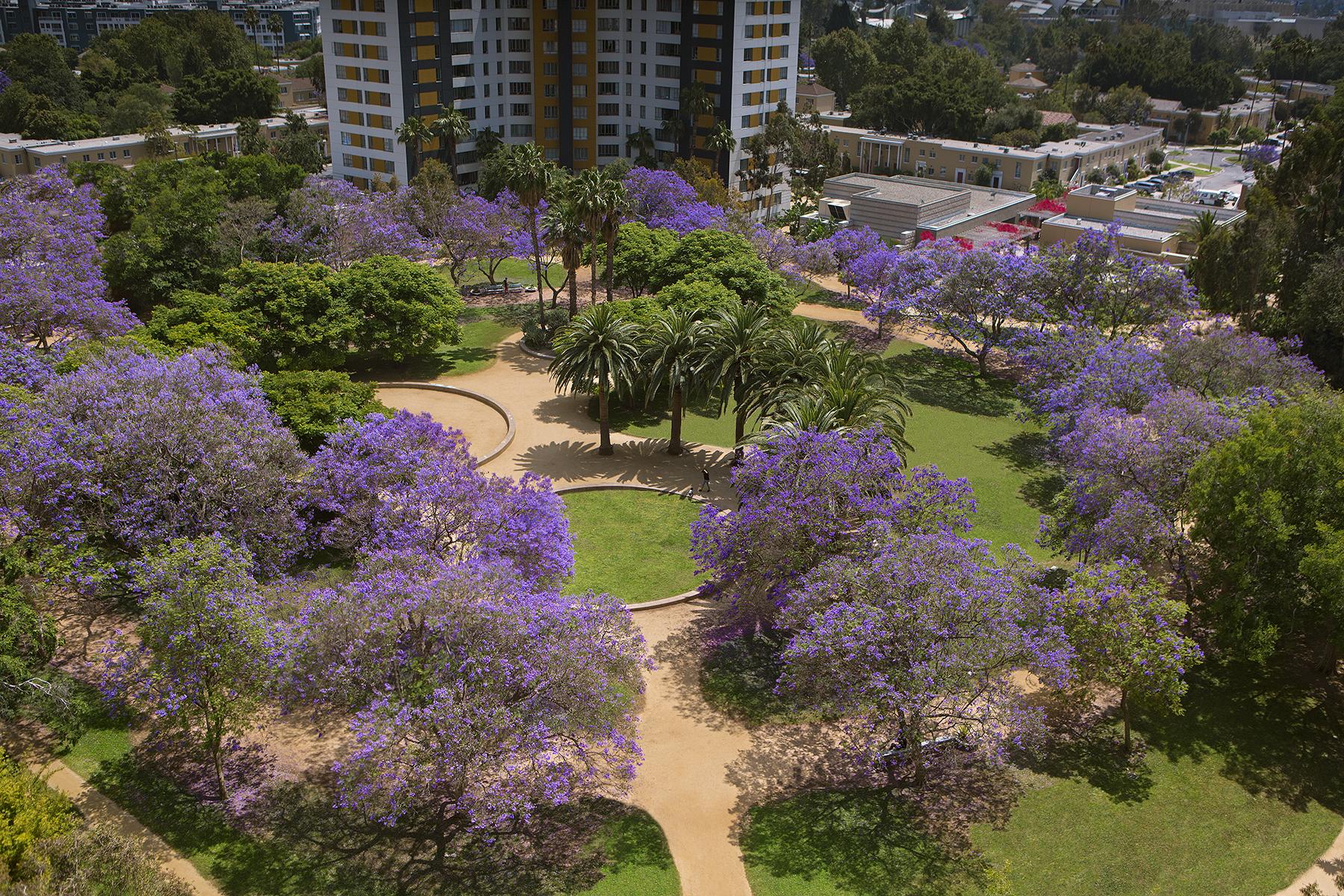 1627-01-Jacaranda-Trees_Park-LaBrea_EricFiggePhotos.jpg