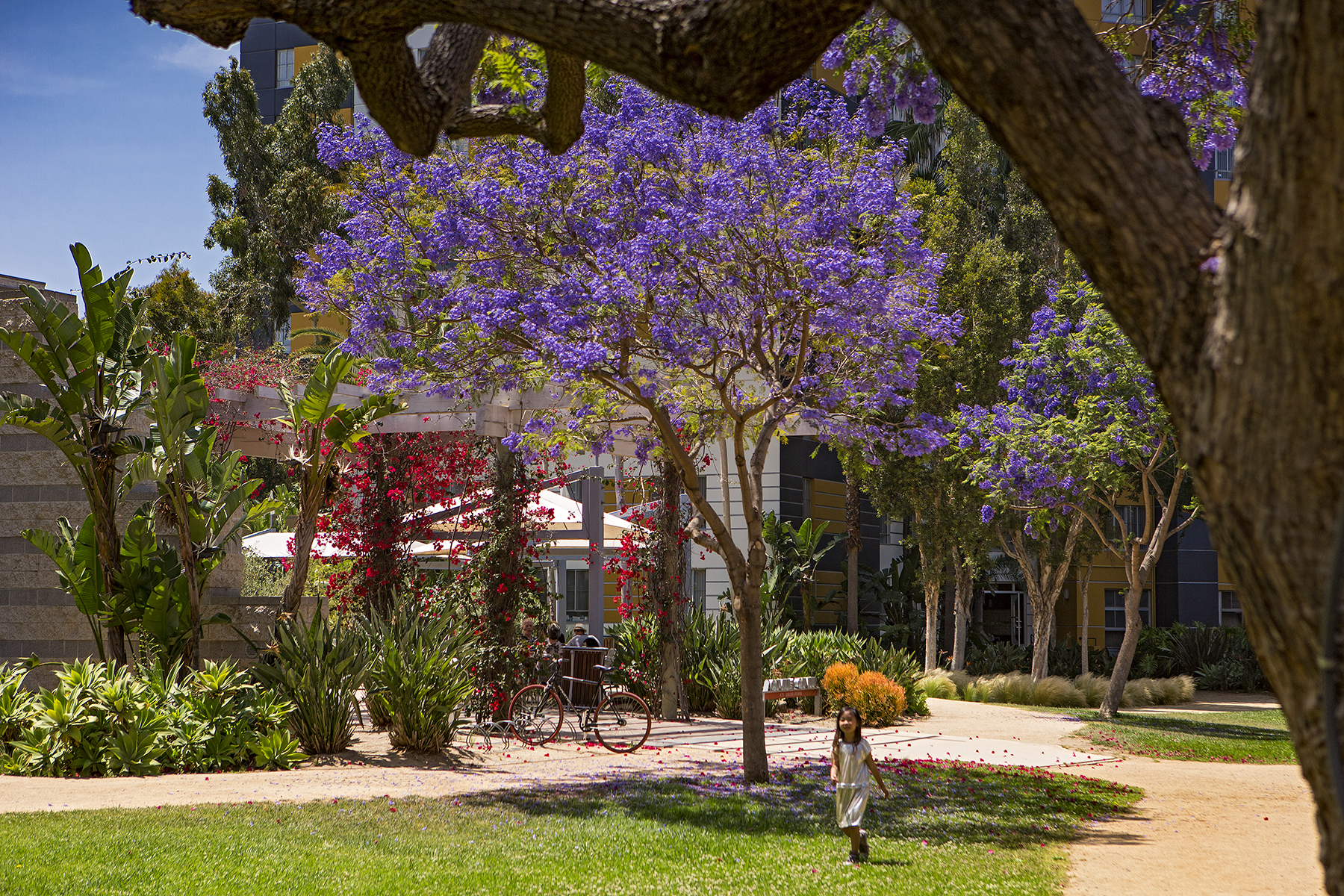 1627-04-Jacaranda-Trees_Park-LaBrea_EricFiggePhotos.jpg