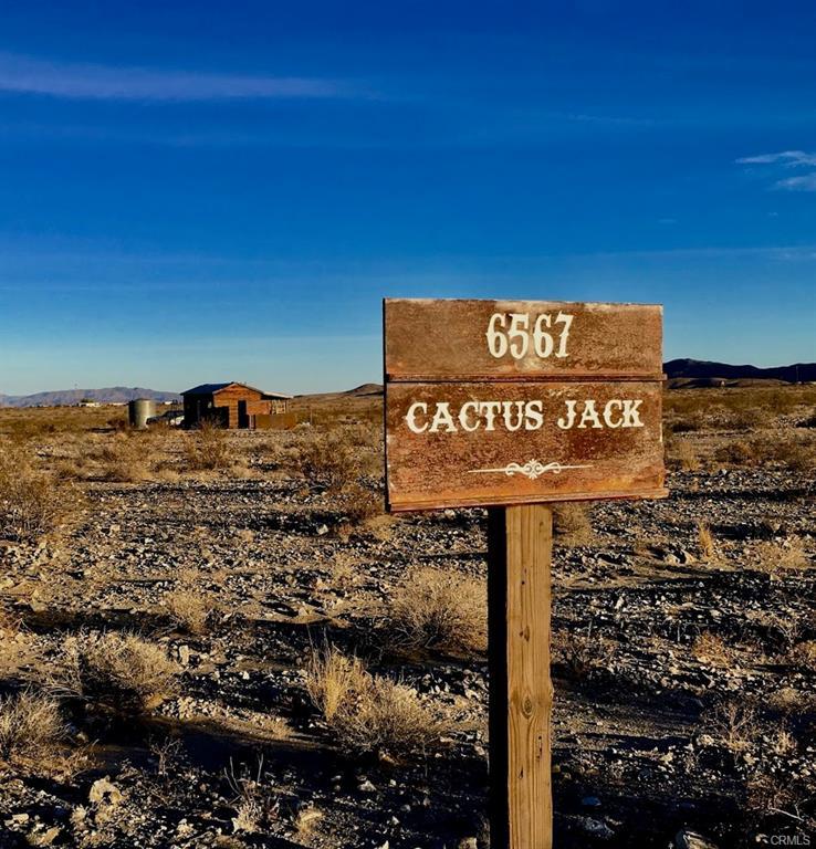 Cactus18.jpg