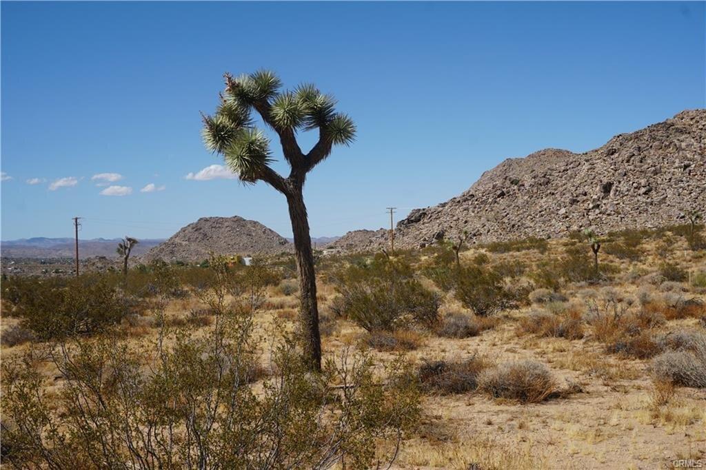 desert1.jpeg